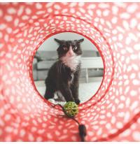 Dierendag actie - Kattenspeeltjes
